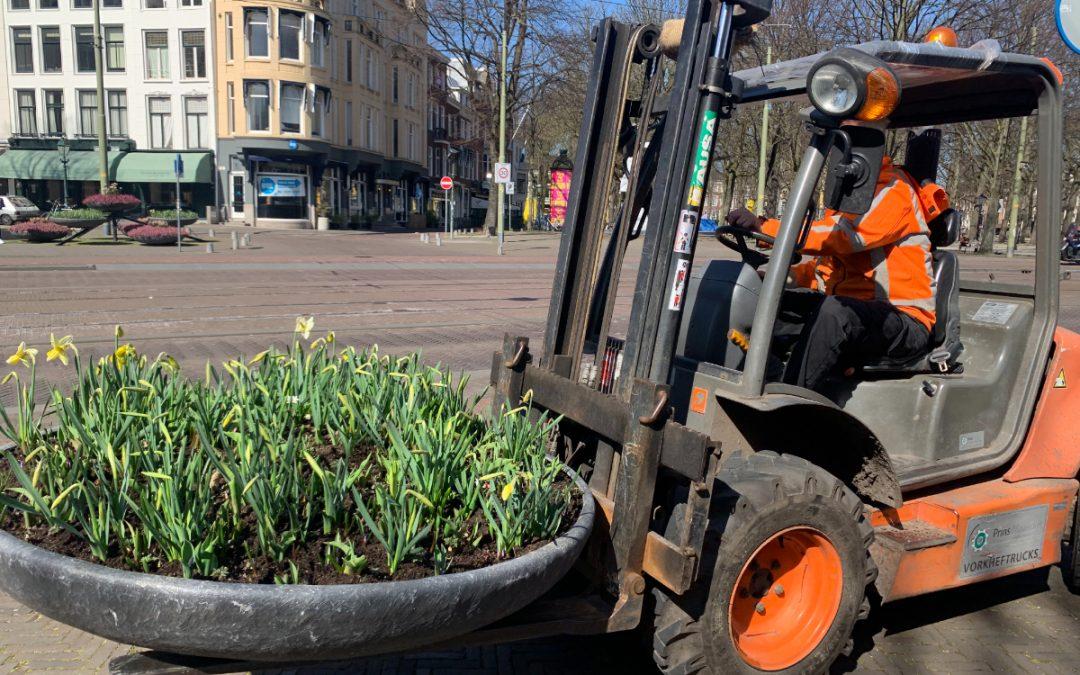 Lentebakken met narcis prinses Amalia sieren de binnenstad